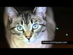 Binary Option Tutorials - AAoption Video Course The Happy Cat Course - Cat Adoption