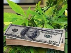 Binary Option Tutorials - trading marijuana Make Money with Marijuana Stocks //